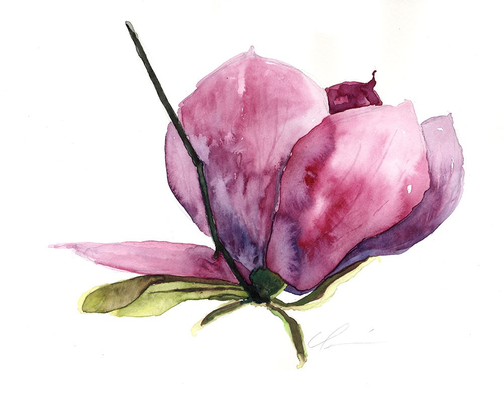 """Saucer Magnolia II"" original fine art by Clair Hartmann"
