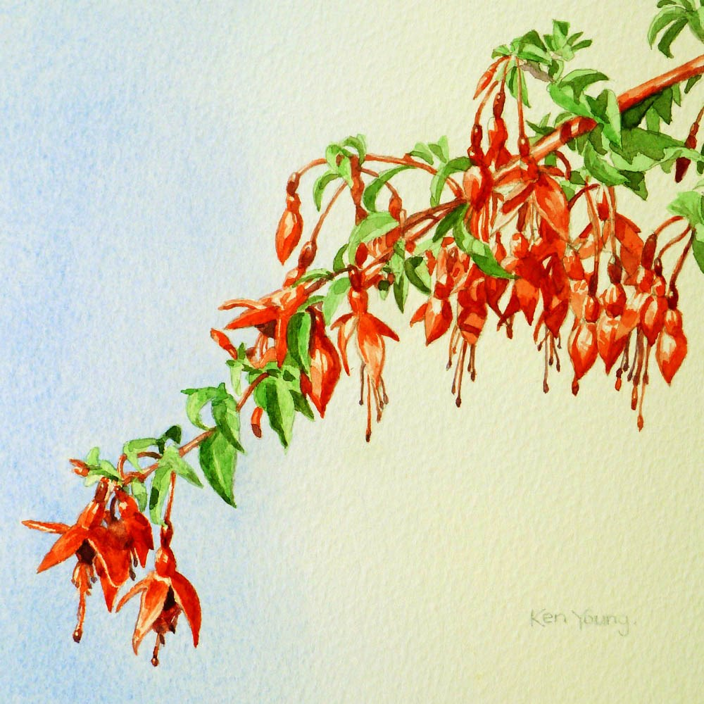 """Fuchsia"" original fine art by Ken Young"