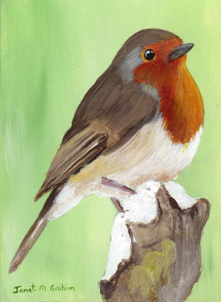 """European Robin ACEO"" original fine art by Janet Graham"