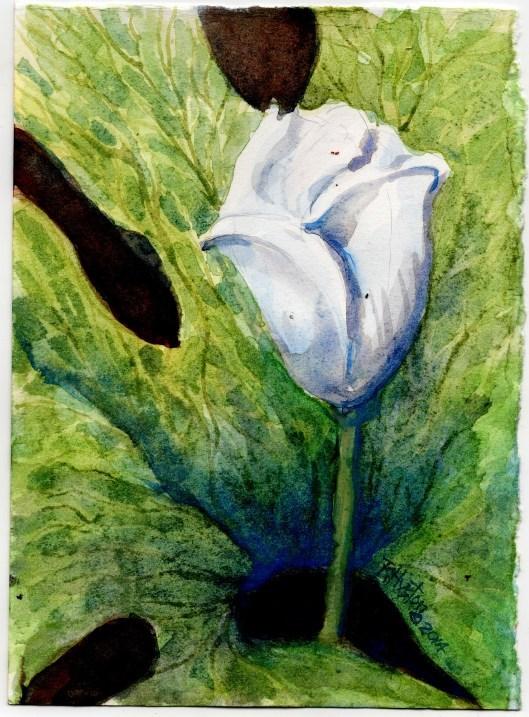 """Bloodroot... Sanguinaria canadensis"" original fine art by Richard Huston"