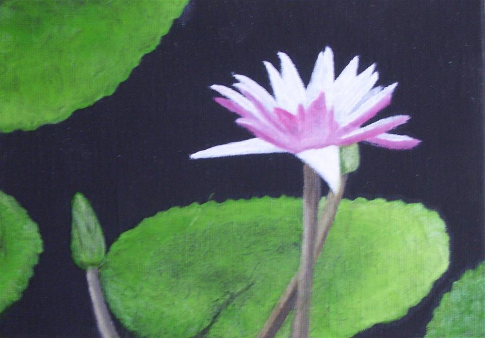 """Water Lily"" original fine art by John Marcum"