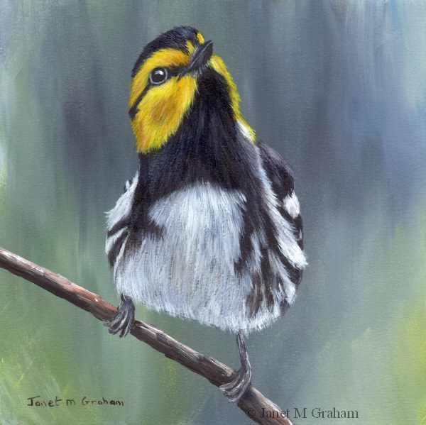 """Golden Cheeked Warbler"" original fine art by Janet Graham"