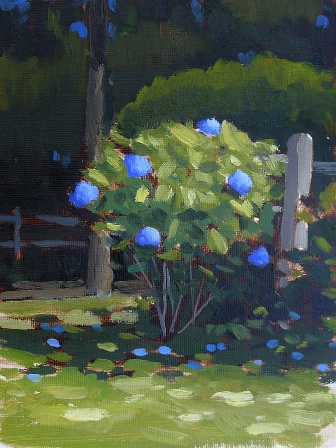 """Sunlit Hydrangea"" original fine art by Adam Houston"