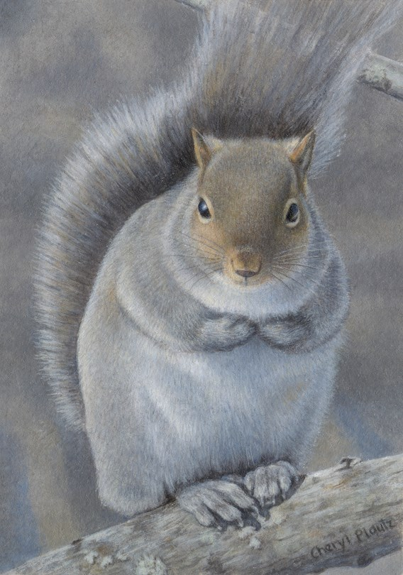 """Winter Gray Squirrel"" original fine art by Cheryl Plautz"