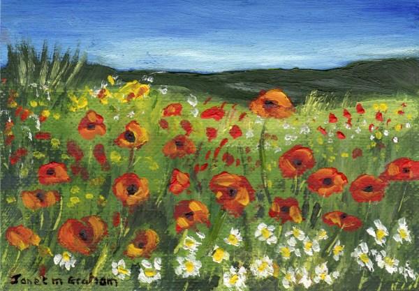 """Poppy Field ACEO"" original fine art by Janet Graham"
