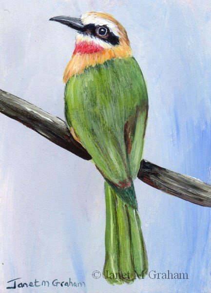 """White Fronted Bee Eater ACEO"" original fine art by Janet Graham"