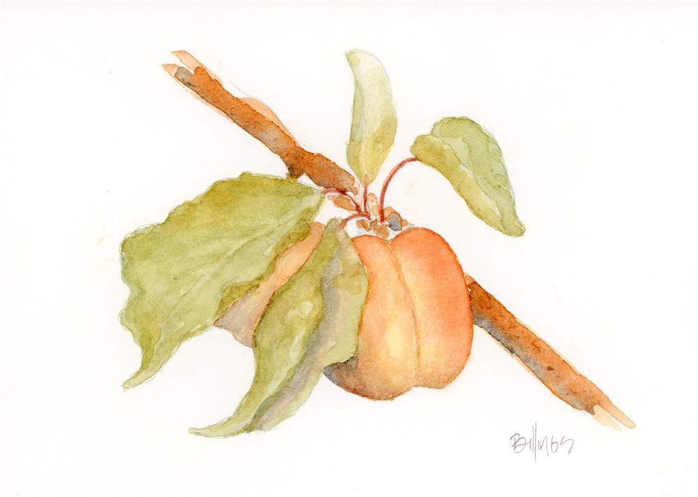 """Apricots II"" original fine art by Susanne Billings"