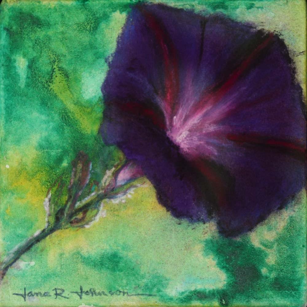 """Morning Glory 2"" original fine art by Jana Johnson"
