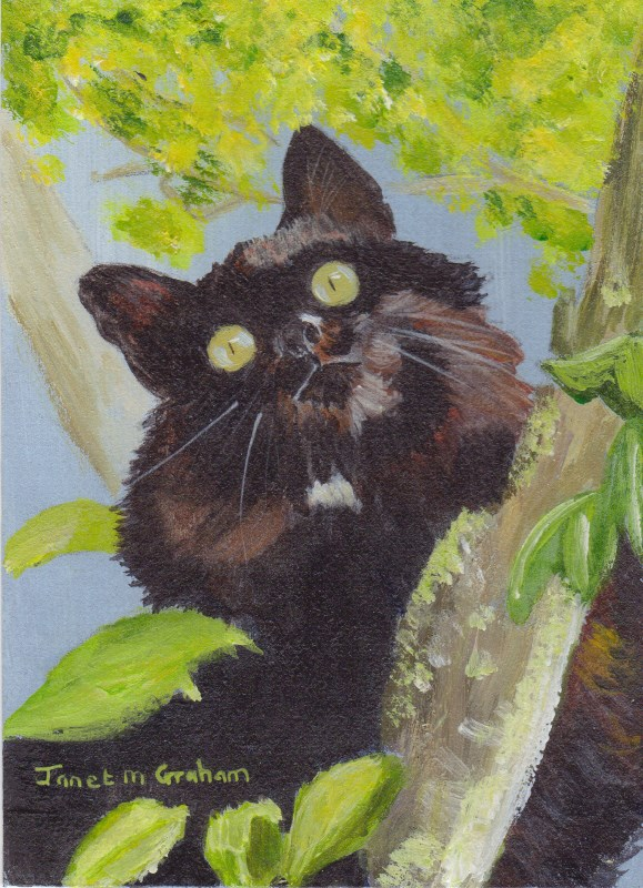 """""""Now What? (Cat ACEO)"""" original fine art by Janet Graham"""