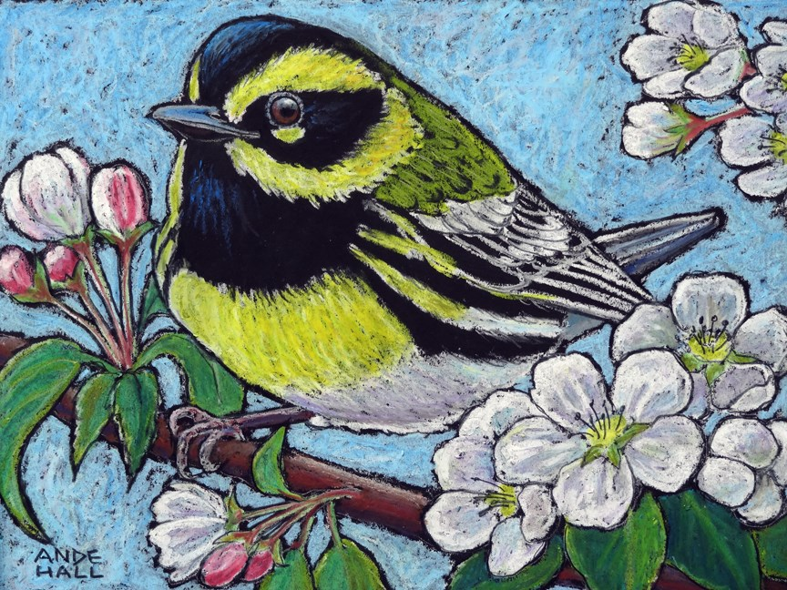 """Townsend's Warbler"" original fine art by Ande Hall"