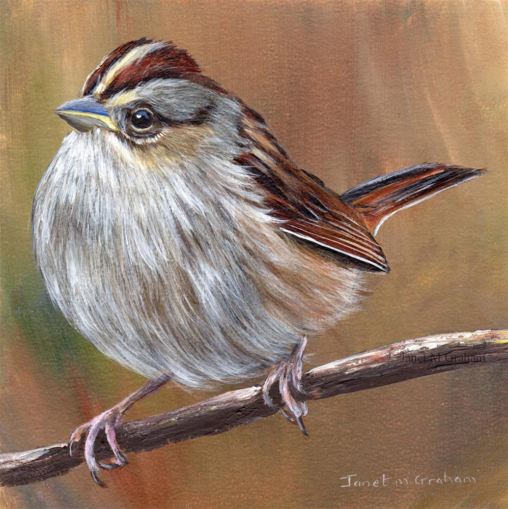 """Swamp Sparrow"" original fine art by Janet Graham"
