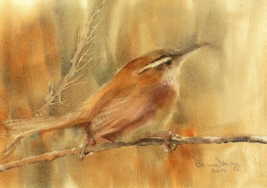"""Third Wren Study"" original fine art by Dianne Mize"