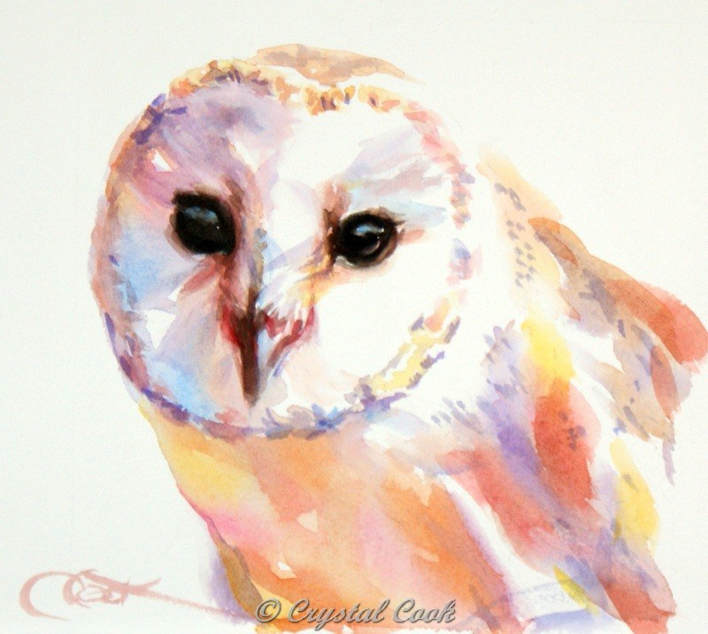 """Little Owl"" original fine art by Crystal Cook"