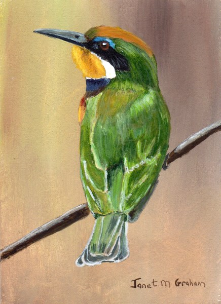 """""""Blue Breasted Bee - Eater ACEO"""" original fine art by Janet Graham"""