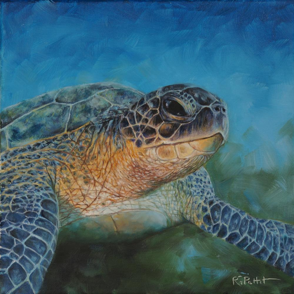 """Sea Turtle"" original fine art by Rhea  Groepper Pettit"