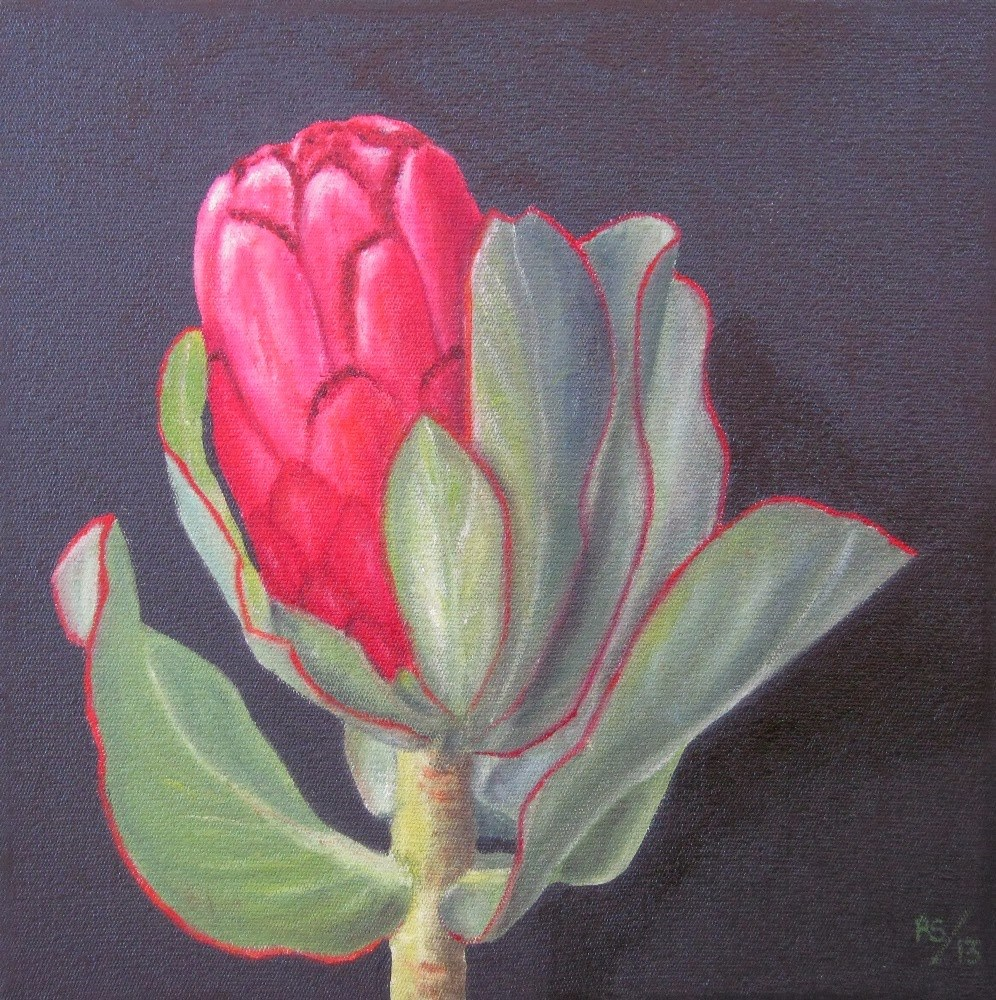 """Protea Stokoei"" original fine art by Pera Schillings"