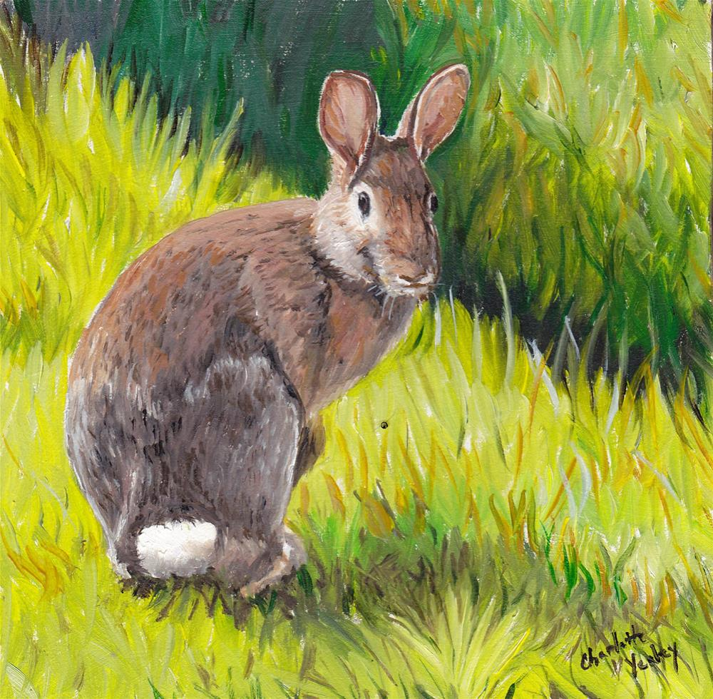 """""""Cottontail"""" original fine art by Charlotte Yealey"""