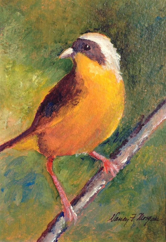 """Common Yellowthroat"" original fine art by Nancy F. Morgan"