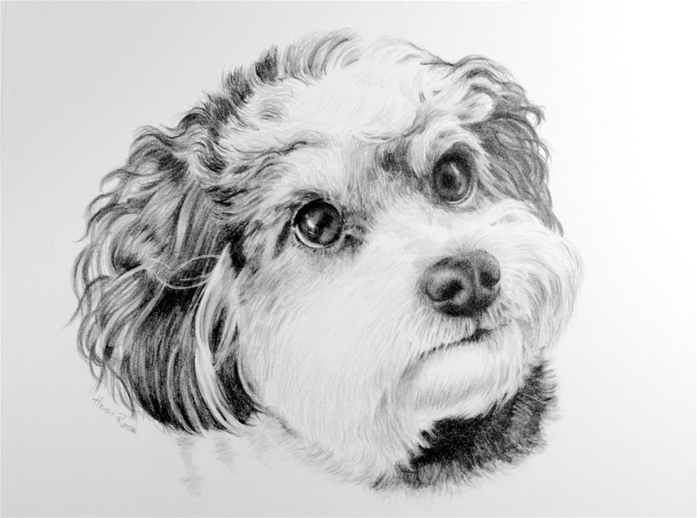 """Stanley"" original fine art by Heidi Rose"