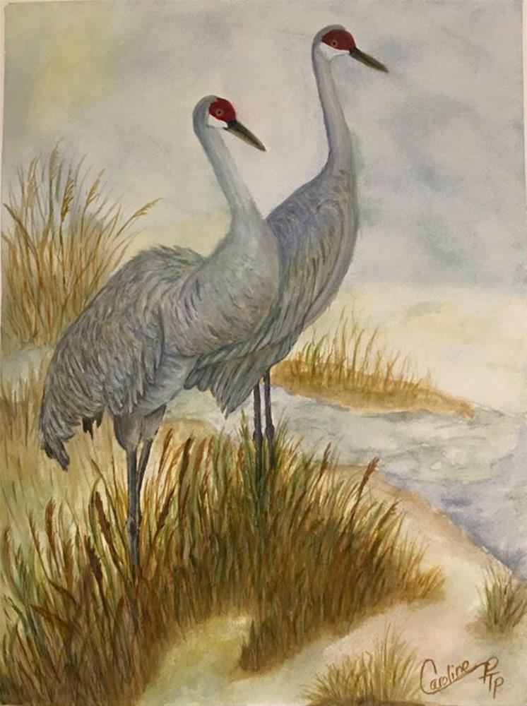 """Watercolor of Sand Hill Cranes"" original fine art by Caroline harris"