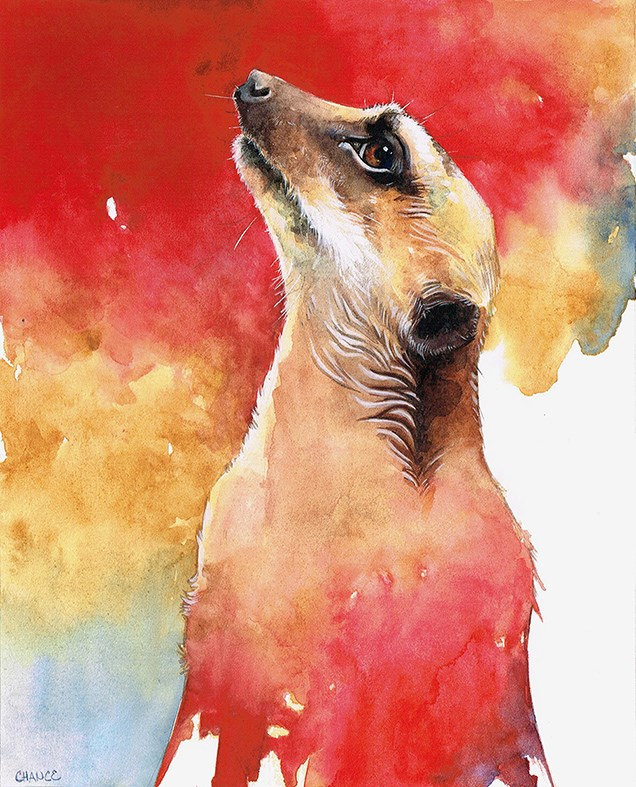 """Meerkat"" original fine art by Annabel Chance"