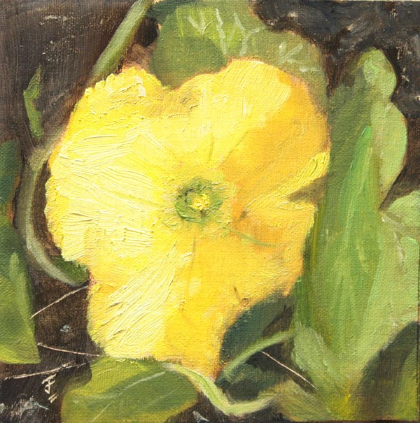 """Squash Blossom"" original fine art by Jane Frederick"