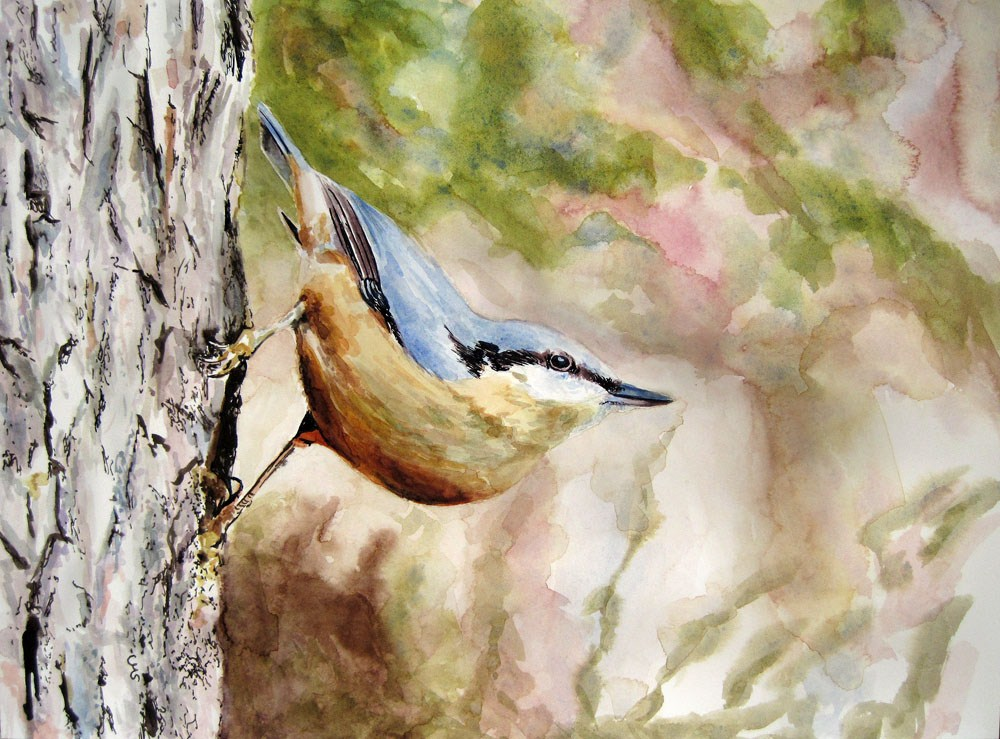 """Nuthatch"" original fine art by Ulrike Miesen-Schuermann"