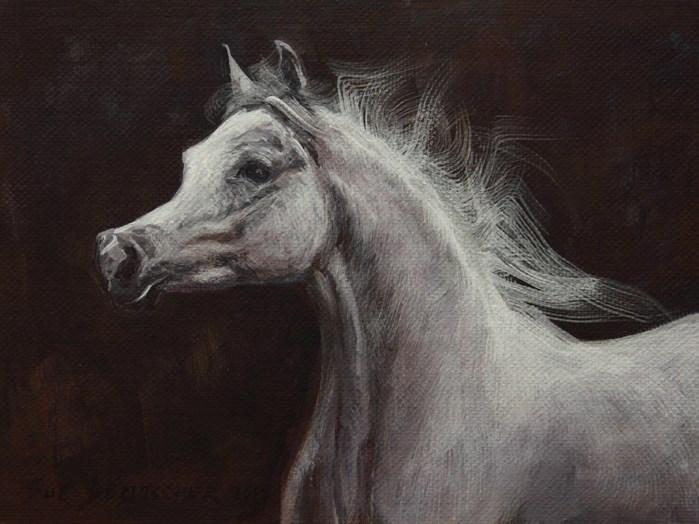 """""""Gray Arabian"""" original fine art by Sue Deutscher"""