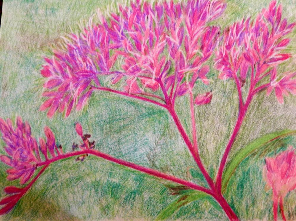 """Joe Pye Weed"" original fine art by Elaine Shortall"