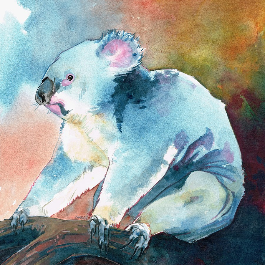 """Koala"" original fine art by Annabel Chance"