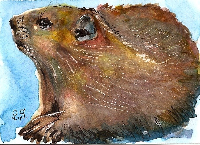 """""""ACEO In Honor of Groundhog Day Feb 2 Rodent Animal Art by Penny StewArt"""" original fine art by Penny Lee StewArt"""