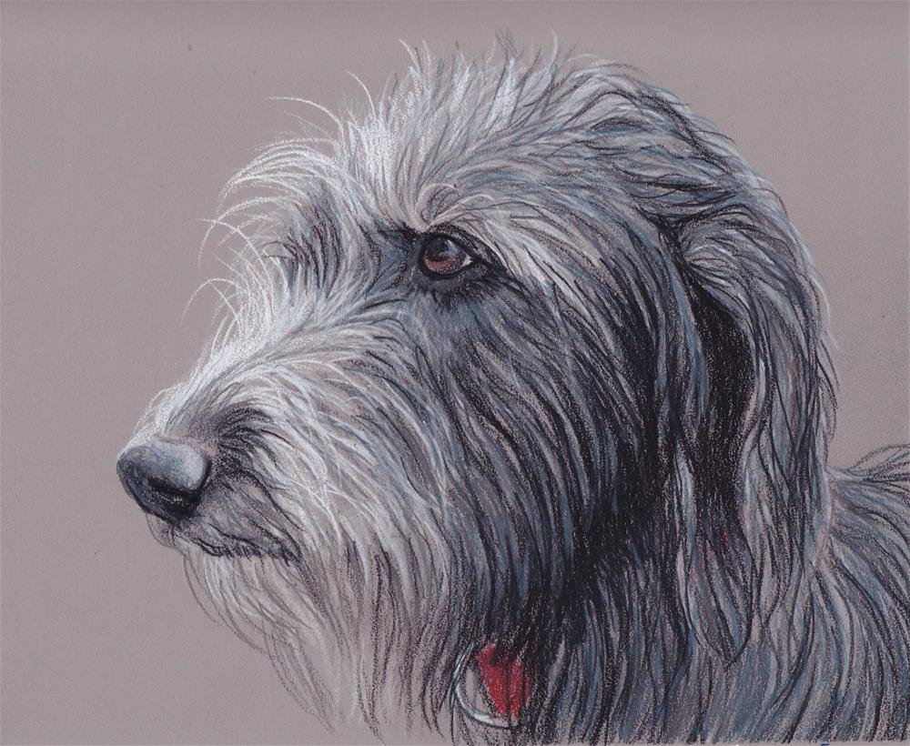 """Scottish Deerhound"" original fine art by Charlotte Yealey"