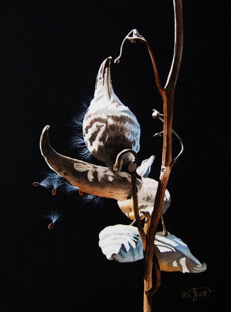 """""""Milk Weed Pod"""" original fine art by Jacqueline Gnott, whs"""