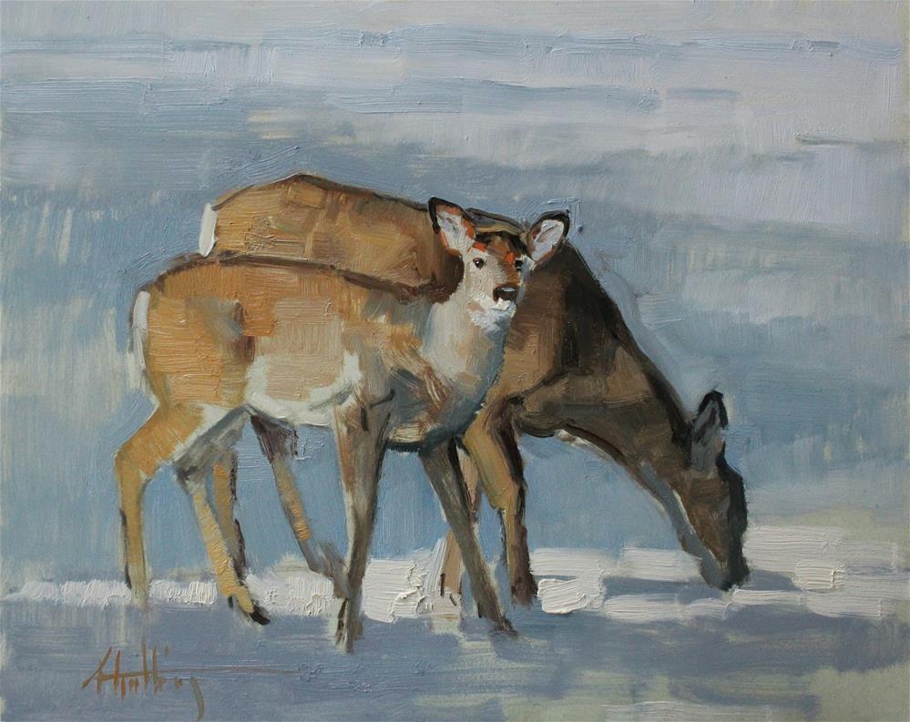 """Whitetail Study#2"" original fine art by Abigail Gutting"