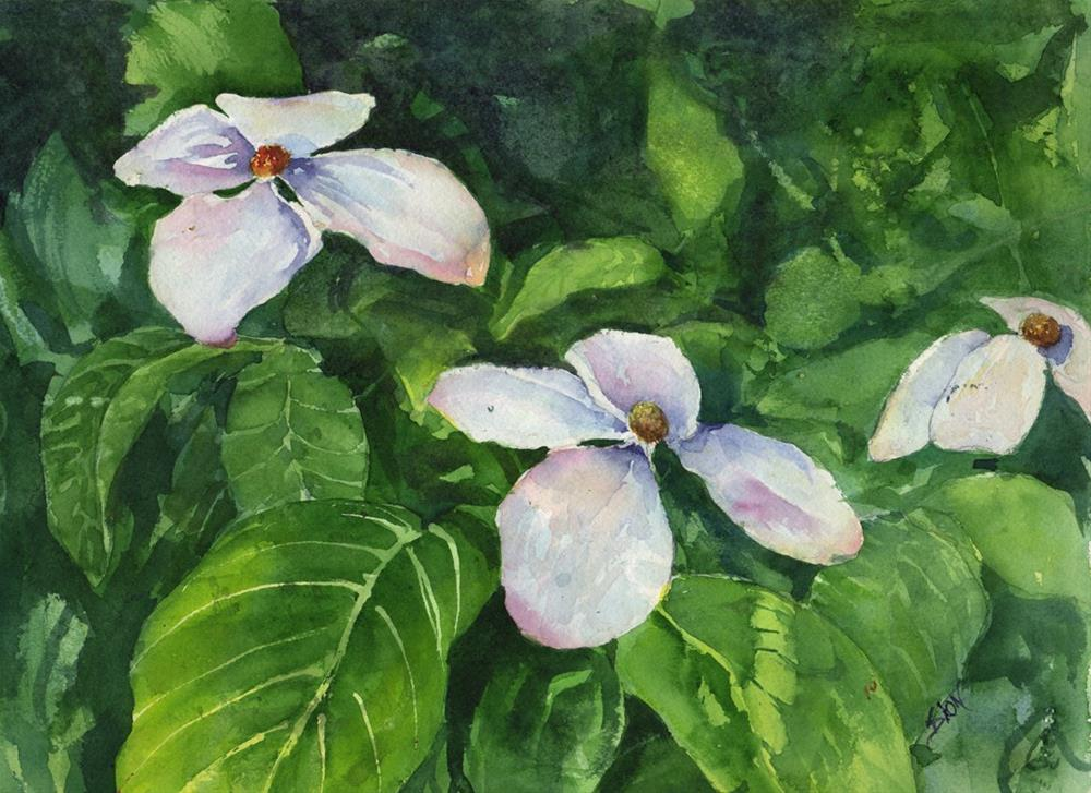 """Japanese Dogwood"" original fine art by Sue Dion"
