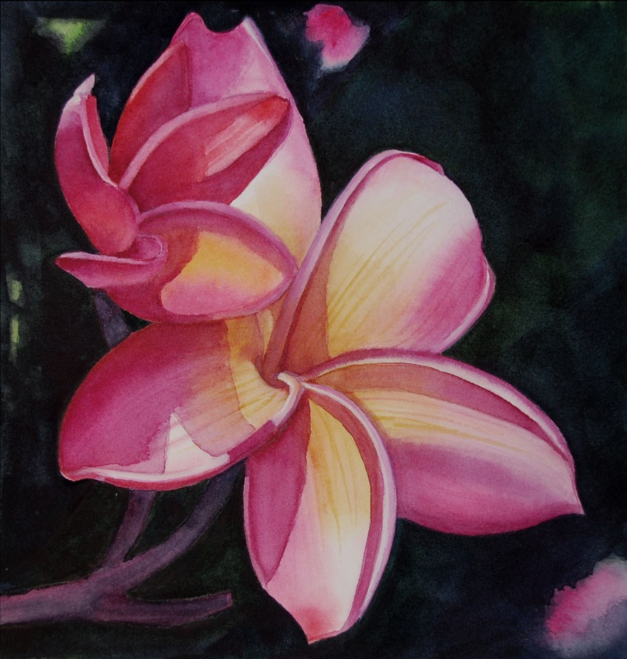 """Pink and Yellow Plumeria"" original fine art by Mary Anderson"