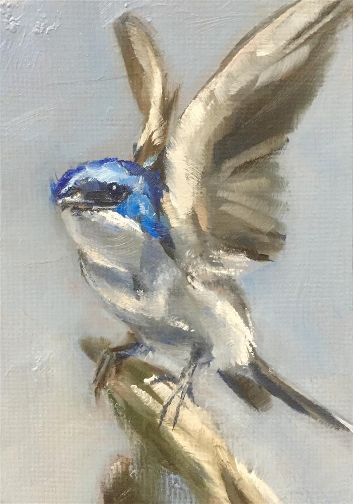 """Tree Swallow"" original fine art by Gary Bruton"