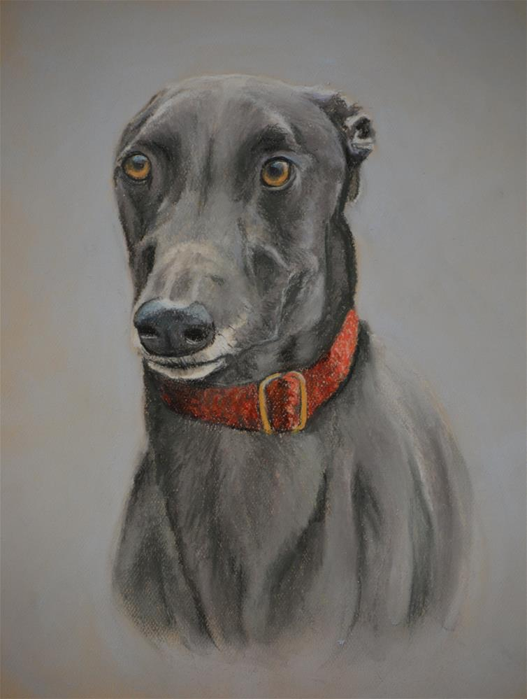 """""""Greyhound"""" original fine art by Charlotte Yealey"""