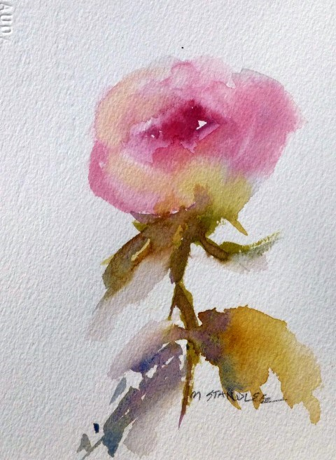 """Rose Study 13109"" original fine art by Nancy Standlee"