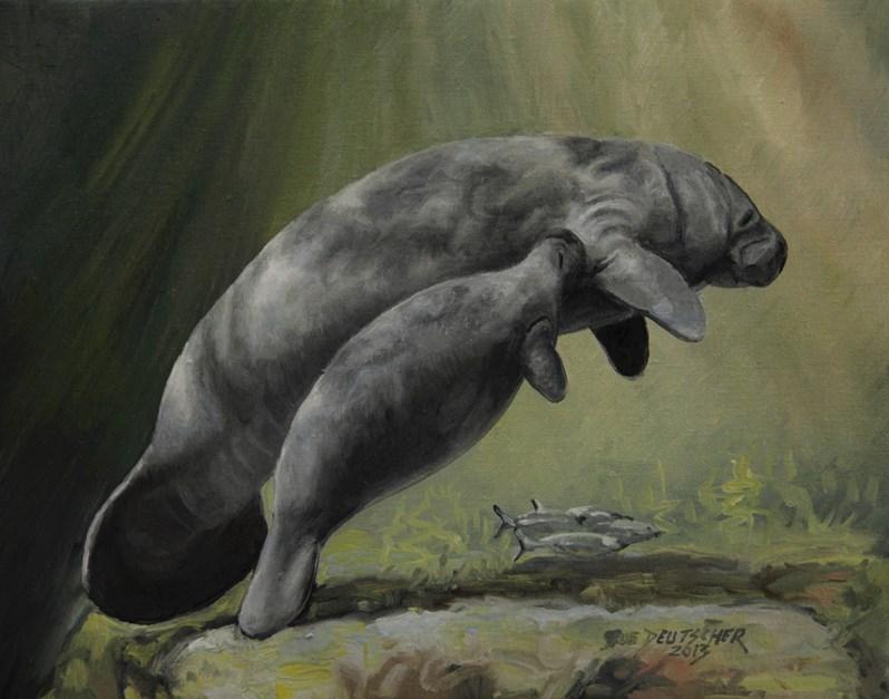 """""""Manatee"""" original fine art by Sue Deutscher"""