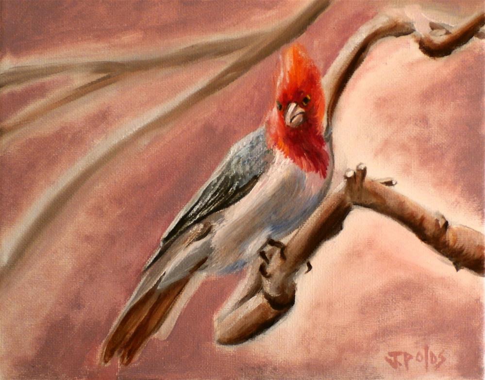 """Brazilian Cardinal"" original fine art by Joann Polos"