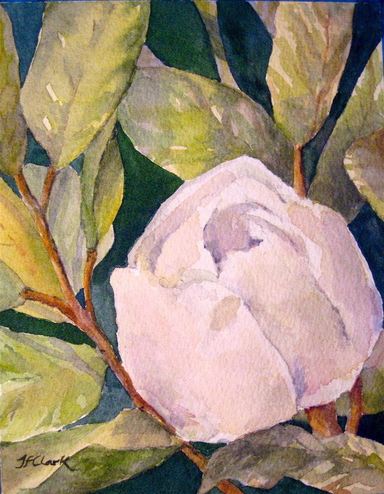 """Magnolia bud"" original fine art by Judith Freeman Clark"