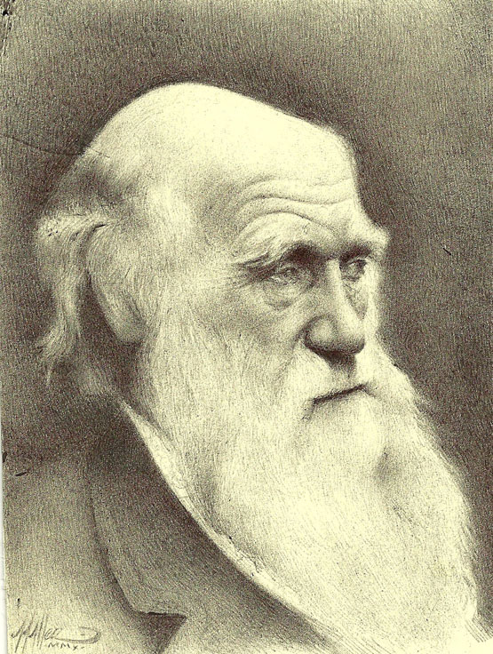 """Charles Darwin"" original fine art by Jonathan Aller"
