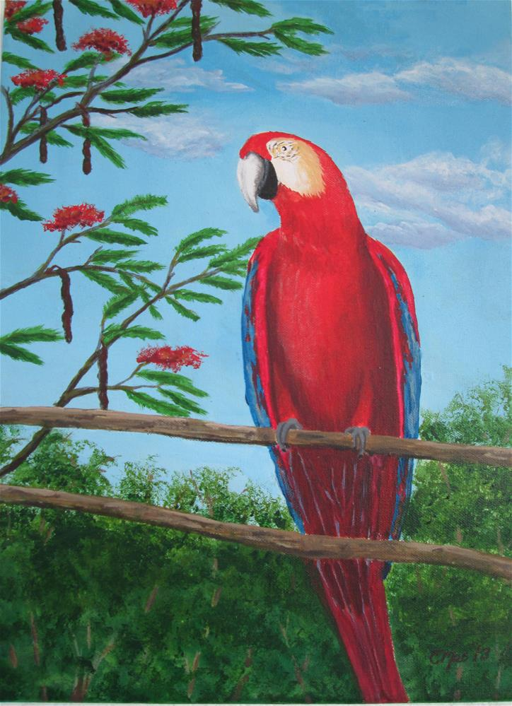 """Scarlet Macaw"" original fine art by Chris MacCormack"
