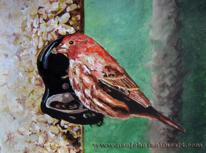 """House Finch"" original fine art by Nan Johnson"