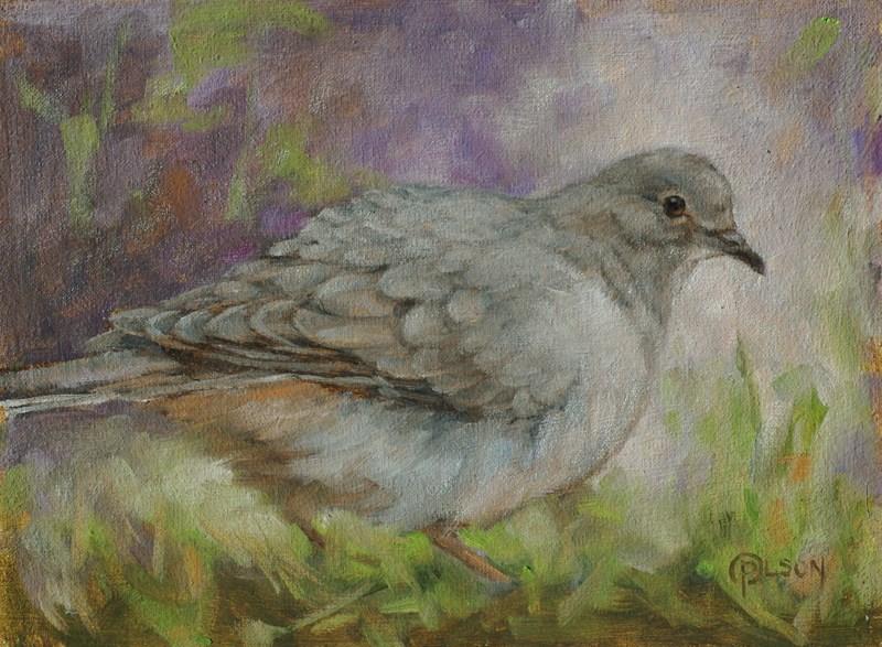 """""""mourning dove"""" original fine art by Priscilla Olson"""