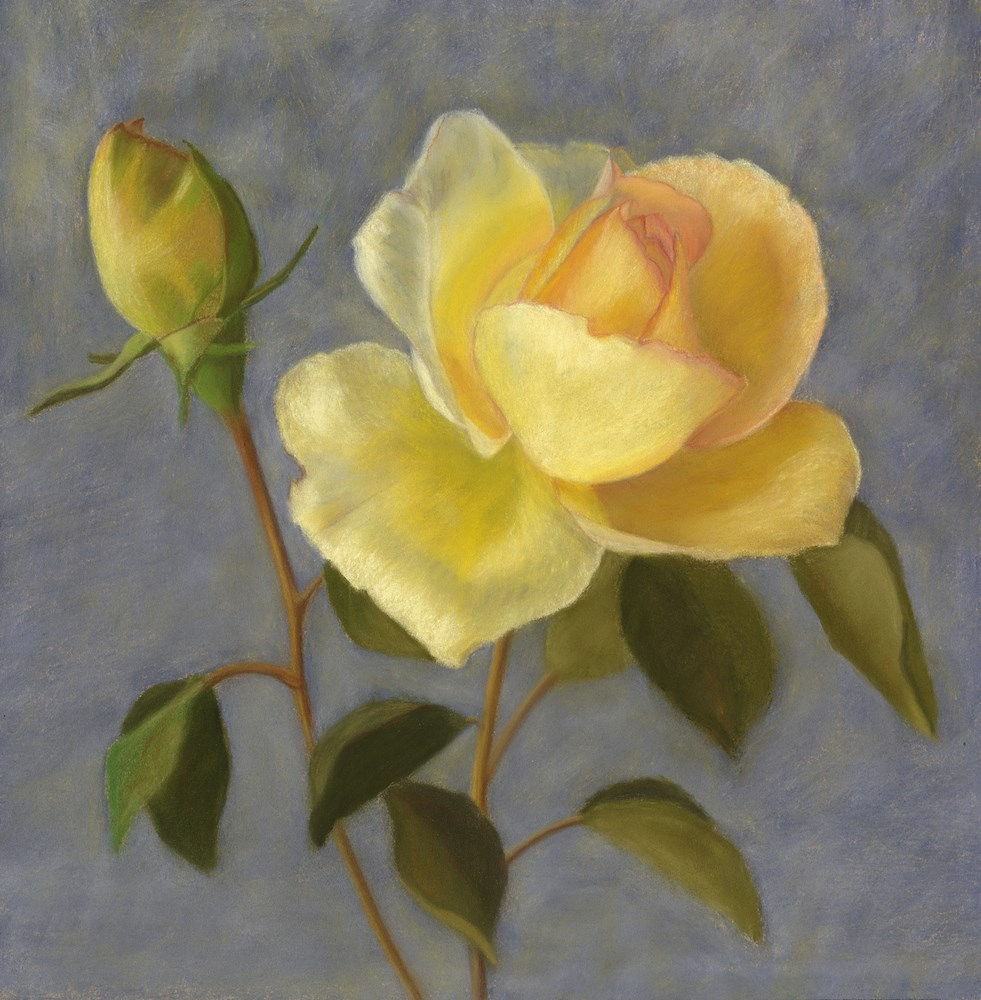 """Yellow Rose Buds"" original fine art by Susan Fern"
