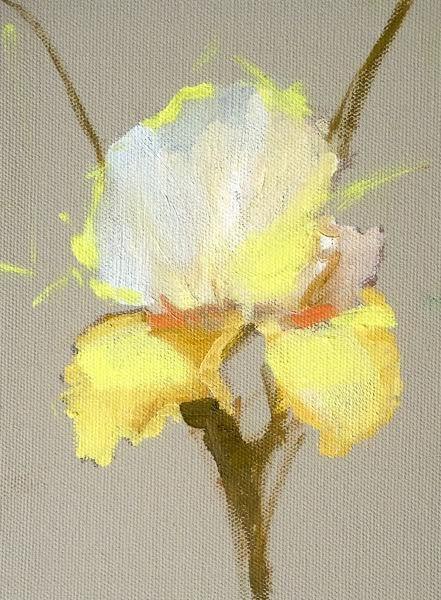 """Still Life Floral Painting, Flower Art Yellow Iris by Colorado Artist Susan Fowler"" original fine art by Susan Fowler"
