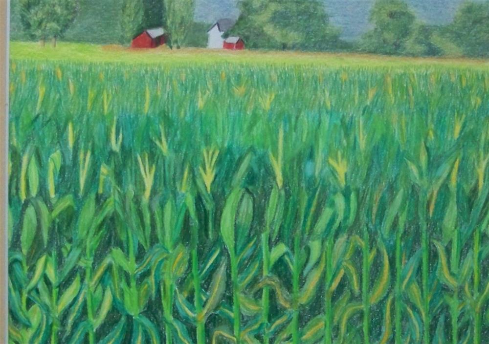 """Ripening Corn"" original fine art by Elaine Shortall"