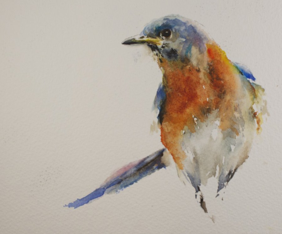 """Bluebird Watercolor"" original fine art by Sue Churchgrant"